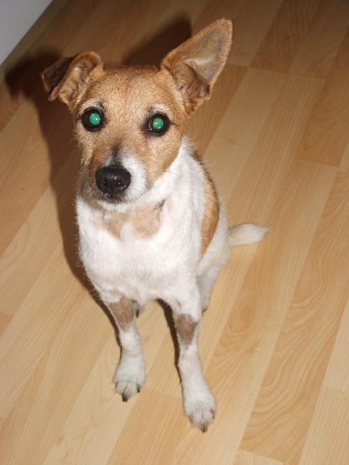 sadie-green-eyes.JPG